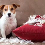 Dog Anxiety due to COVID-19: How to Resolve Separation Anxiety
